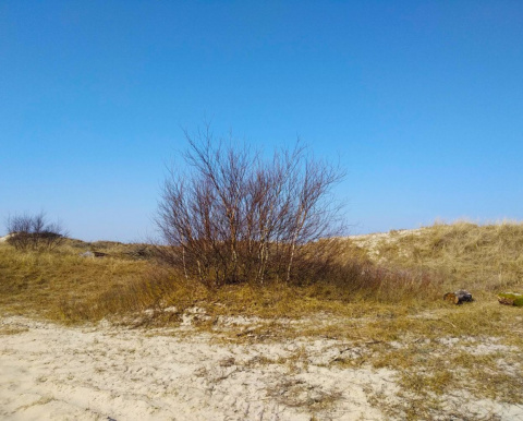 Куршская коса близ Балтийского моря