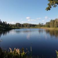 Беловежская пуща: озеро Плянта-1