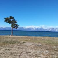День, дерево, Ольхон, Байкал, не тусклый свет...