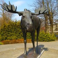 Прусский олень из Советска