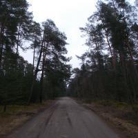 Дорога к посёлку Рыбачий (перпендикулярна основному шоссе)