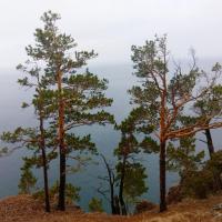 Деревья на мысе Скрипер