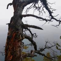 Готическое дерево