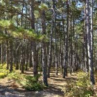Геометрически выверенный лес позади Бахчисарайских столбов