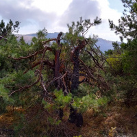 Деревья периодически встречаются, но в тени уже не укрывают