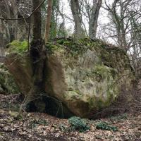Дерево и камень: вековой союз