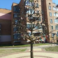 Генеалогическое дерево Керчи (перекрёсток Самойленко и Карла Маркса)